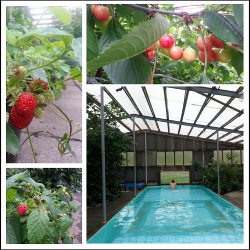 greenhouse pool