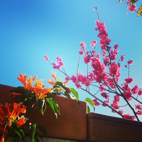 spring fresh