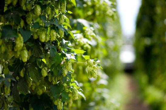 image via http://www.farmsoft.com/